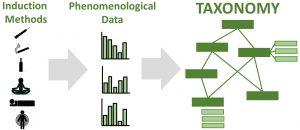taxonomy_figure